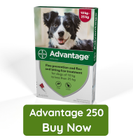 Advantage 250