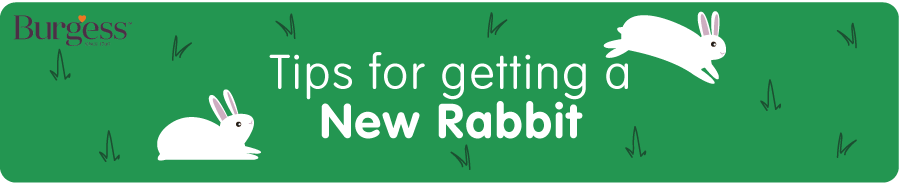 Tips for getting a New Rabbit Burgess Blog Post - Header Banner