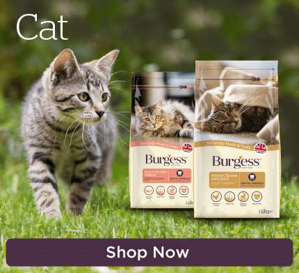 Burgess Cat
