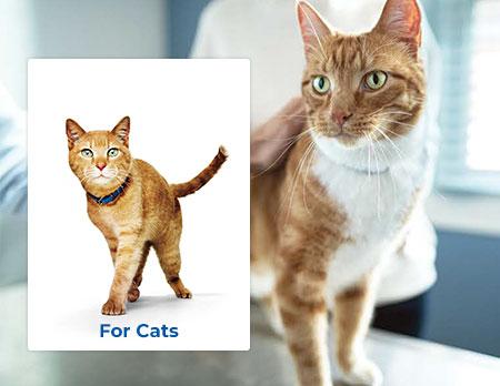 Hills Prescription Diet Cat