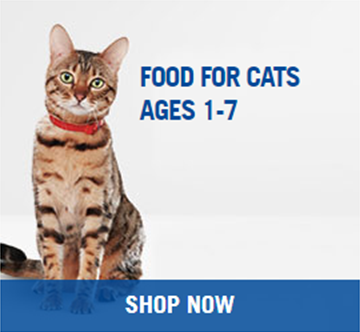 Hills Adult Cat Food