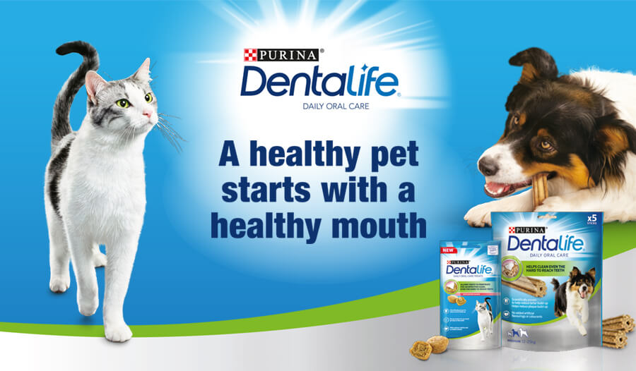 Dentalife Header