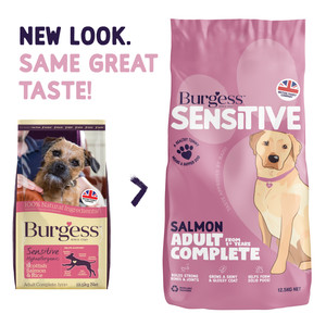 Burgess Sensitive Salmon&Rice food