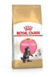 Royal Canin Kitten Maine Coon 36 Dry Cat Food - 4kg