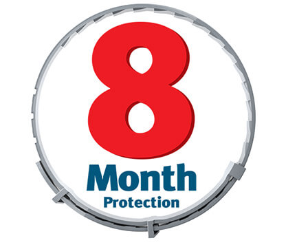 8 Month Protection