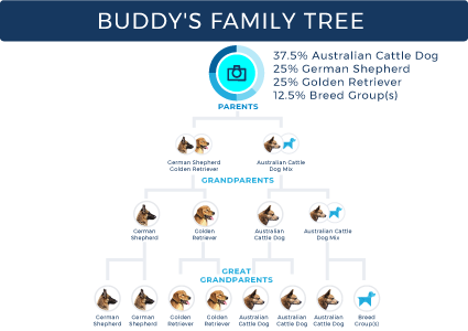 Wisdom Panel family tree