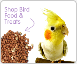 Bird Food Treats
