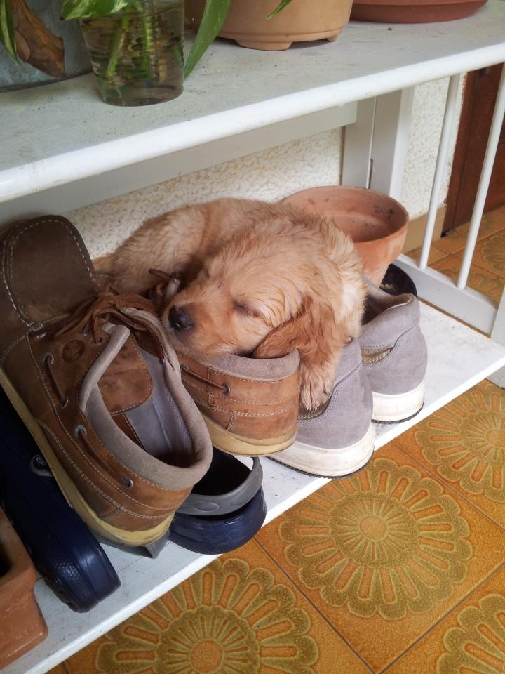 pup-shoes.jpg